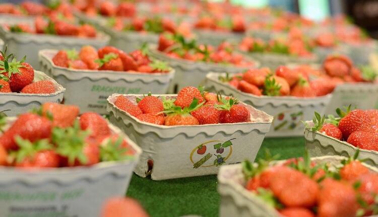 Die ersten Erdbeeren sind da 🍓